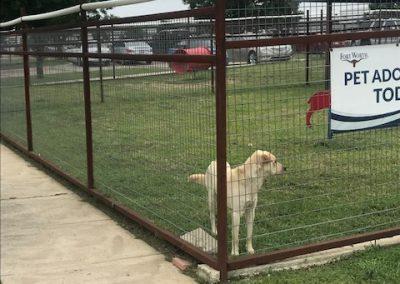Dog Pound Kennel Play Yard Fence
